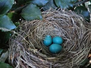 bird-nest-560384_1920