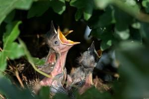 nest-384896_640